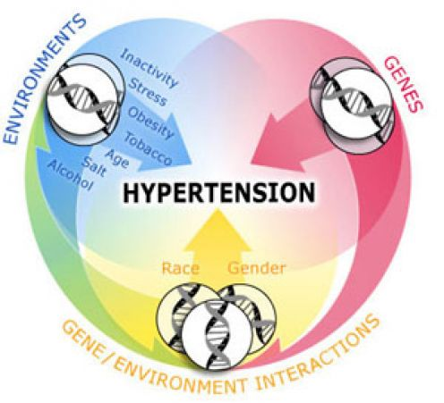Hypertension: Causes, Diagnosis, Symptoms, Prevention ...